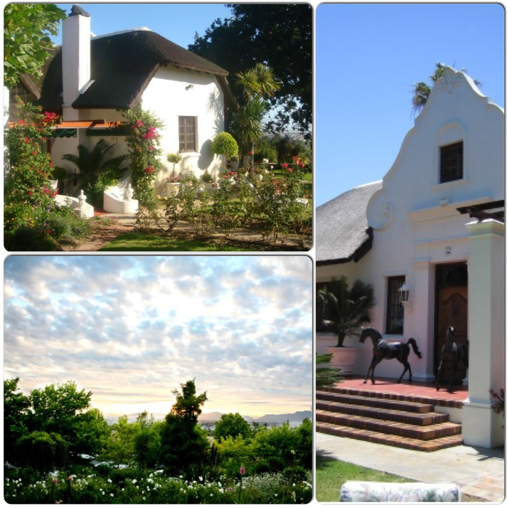 Discovering the South African wines