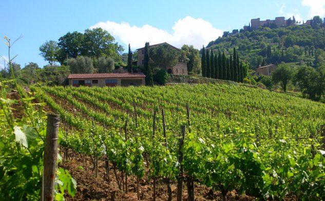 La Gerla wine tasting, in Tuscany, Montalcino